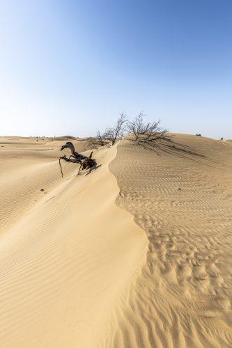 Tree eaten by the desert, Dubai, UAE 🇦🇪