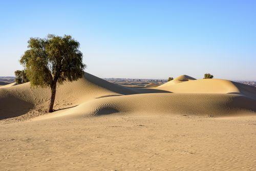 "Dunes, early in the morning. Al Faqaa, Dubai Emirates, United Arab Emirates, <ul class=""exif""><li>Aperture: ƒ/8</li><li>Credit: David GABIS</li><li>Camera: NIKON D810</li><li>Caption: Dunes, early in the morning. Al Faqaa, Dubai Emirates, United Arab Emirates</li><li>Taken: 29 December, 2015</li><li>Copyright: David@davidgabis.com</li><li>Exposure bias: +1EV</li><li>Flash fired: no</li><li>Focal length: 50mm</li><li>ISO: 64</li><li>Keywords: Middle East, acacia, alone, arabia, arabian gulf, arid, background, climate, concept, daytime, desert, desert landscape, drought, dry, dunes, earth, environment, global, green, land, landscape, life, loneliness, lonely, moon, natural, nature, one, plant, remote, rock, sand, sand dunes, sandy background, scenery, single, sky, solitude, summer, tree, tree isolated</li><li>Shutter speed: 1/125s</li><li>Title: Desert Landscape</li></ul>"