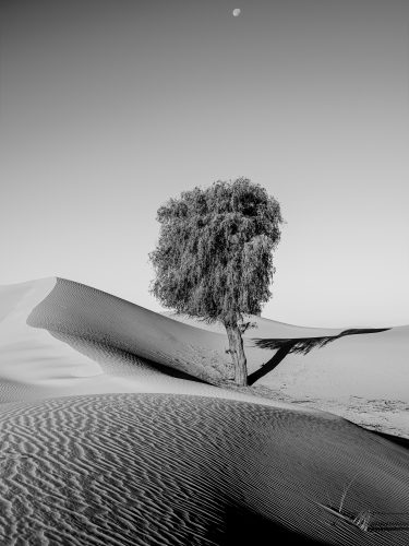 Single tree in the desert, black and white Photography