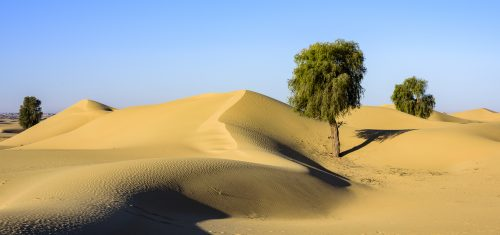 """Forest in the Desert [exif id=""""513""""]"""
